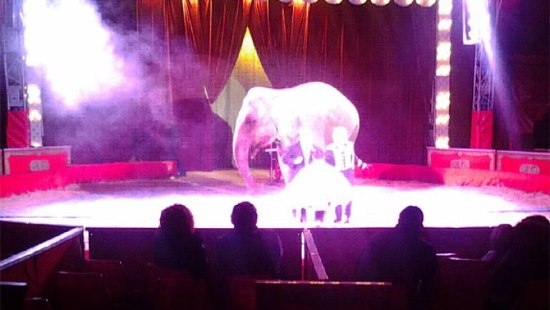 Il Tar del Lazio respinge il ricorso del Circo Orfei, sanzionato per diverse irregolarità amministrative