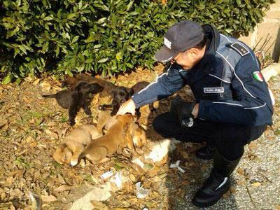 Salvata meticcia di due anni con i suoi 7 cuccioli abbandonati. Ora si cercano famiglie per le adozioni