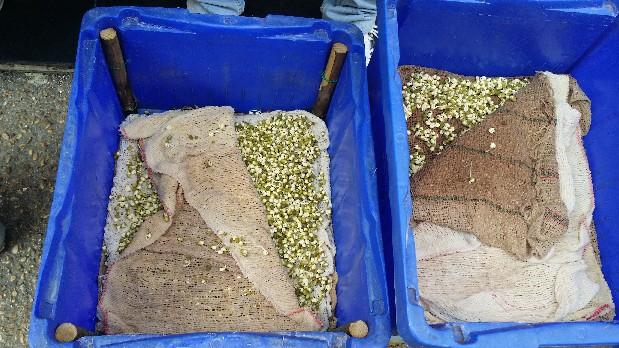 Ciampino. Sequestrati 60 kg di pesce in un ristorante