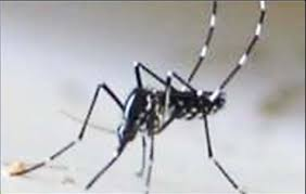 Prevenzione della diffusione degli insetti vettori di arbovirosi: avviso alla cittadinanza