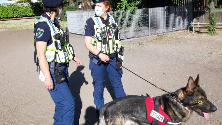 """Progetto """"Scuole Sicure"""": il Nucleo Cinofili della Polizia Locale a tutela della sicurezza degli studenti."""